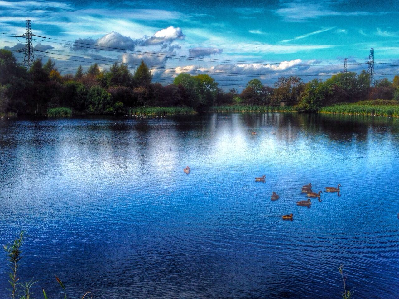 animal themes, bird, animals in the wild, water, large group of animals, animal wildlife, cloud - sky, duck, reflection, lake, tree, nature, sky, no people, outdoors, beauty in nature, day, swimming, scenics, water bird, flock of birds, blue, swan