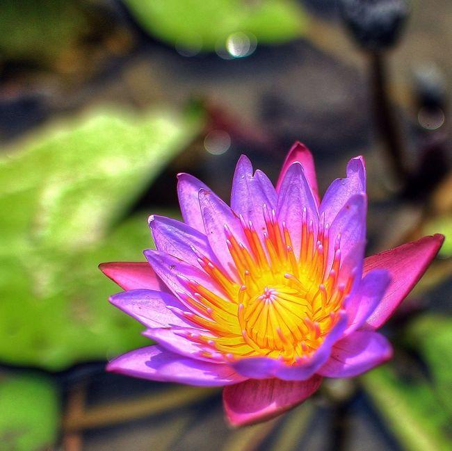 Violet By Motorola EyeEm Nature Lover EyeEm