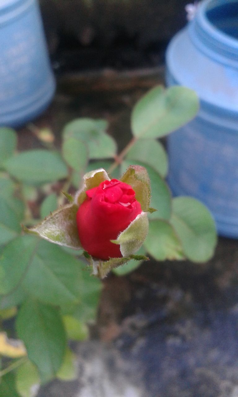 flower, growth, plant, nature, beauty in nature, petal, freshness, outdoors, fragility, no people, day, leaf, close-up, flower head