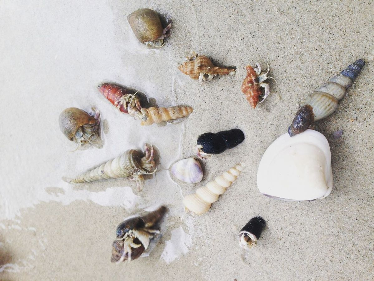 Nature Sea Shells🐚 Breach Beautiful Day Family Outdoors High Angle View No People
