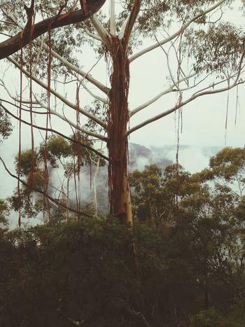 EyeEm Best Shots - Trees Magical Trees EyeEm Nature Lover