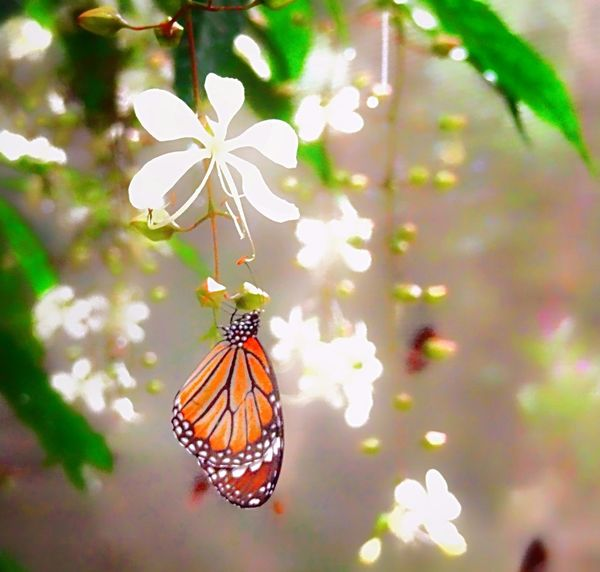 🌈⭐🌠🌍🌞 Butterfly - Insect Beautiful ♥ EyeEm Best Shots Check This Out 😊 Creative Photography