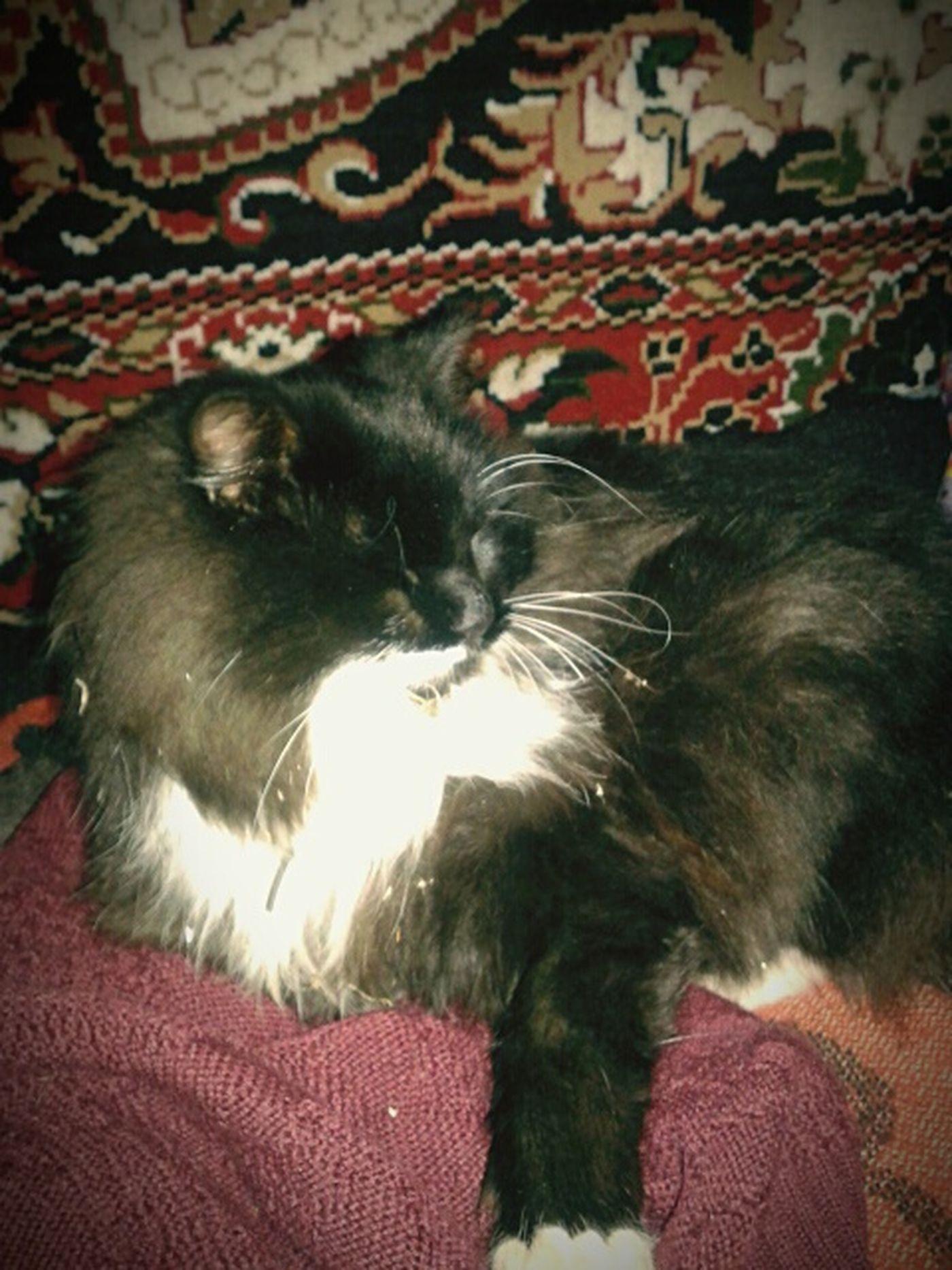 Cat I Love Cats Very Misha Funny Cat♡ Black Cat