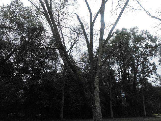 Nature Photography Natural Beauty Grey Sky
