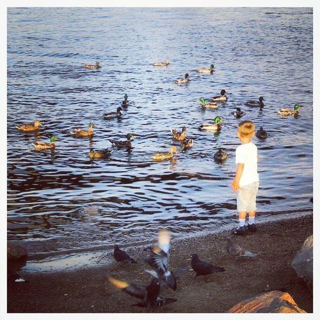 красноярск дети птицы Енисей река instakid krasnoyarsk river instarussia eastsiberia siberia summer