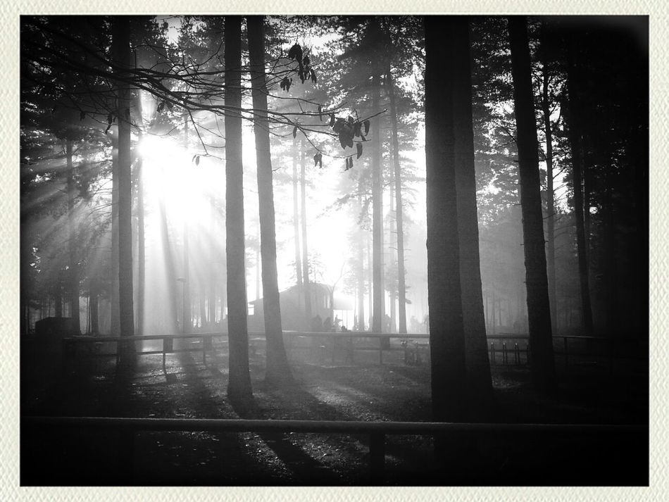 cold eerie bike ride... Escaping Sherwood Forest