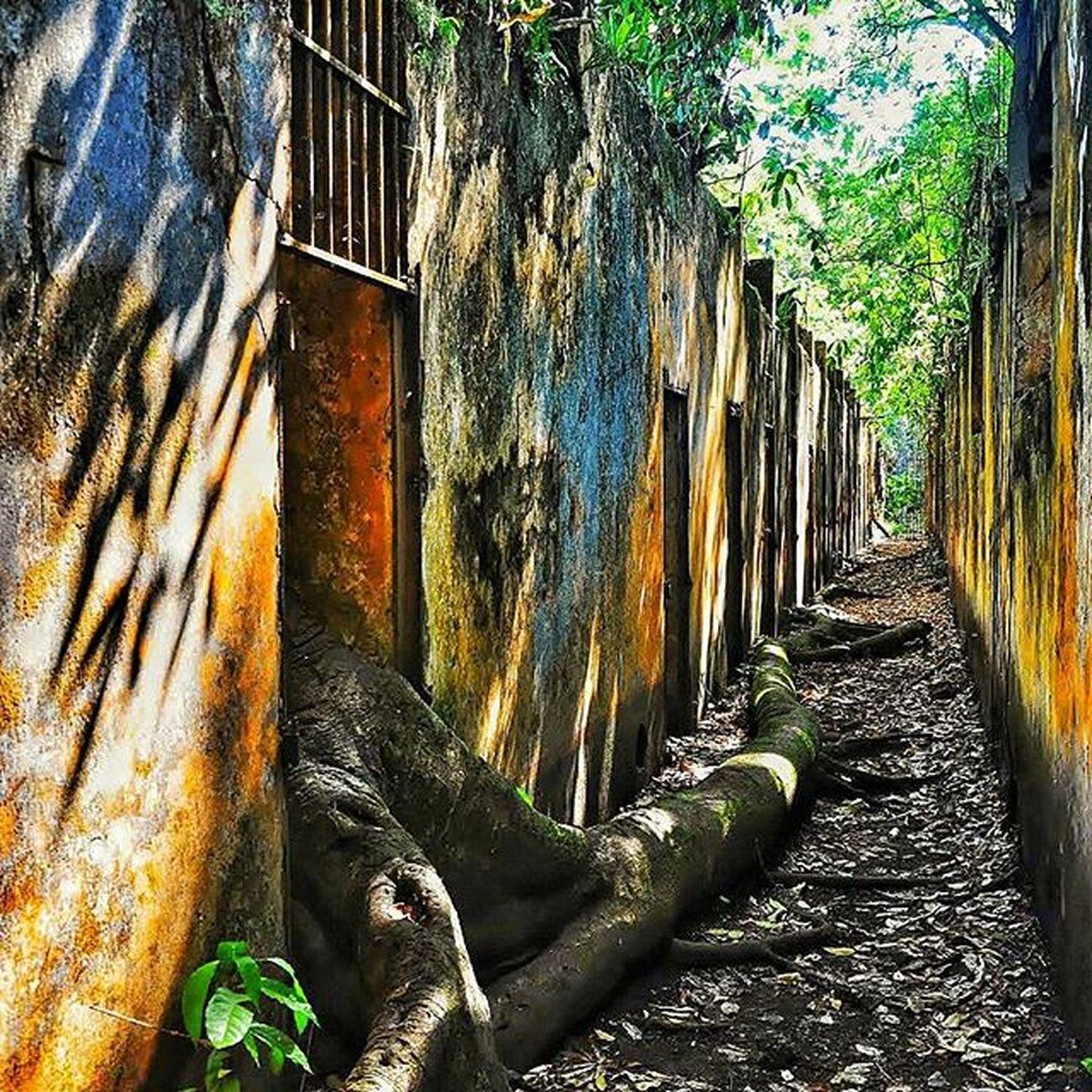 Le bagne - St Joseph (Guyane Française) Nikonfr Igersfrance Igersguyane Igersamazonia Amazonie Guyana Island Papillon Bagne Ilesdusalut Ig_worldclub Ig_europe Ig_great_pics IGDaily Igersoftheday Igaddict Super_france