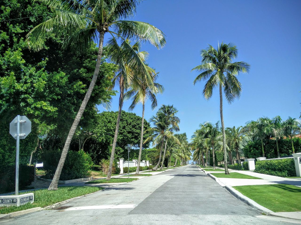 Clear Sky Palm Tree The Way Forward Tree Tranquil Scene Green Color Outdoors Nature Summer Sunny Day Footpath Florida Life Florida Street Photography Road To Sea Ocean Road Drive Tranquility Blue Travel Destinations Tourism
