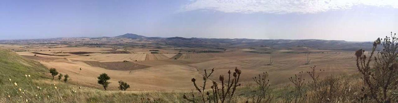 Paesaggio Puglove  Tavoliere Estate Trebbiatura