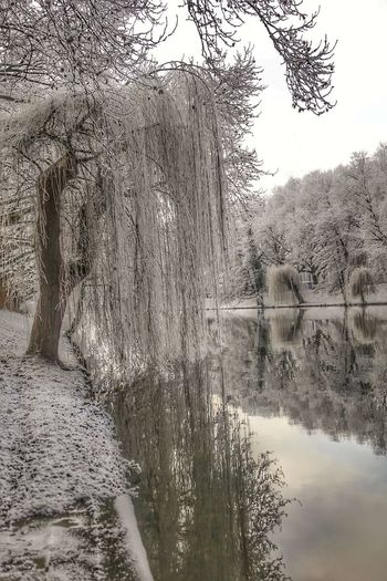 Down by the River Tree Water Nature Tranquility Bare Tree Reflection Outdoors Day Built Structure No People Lake Growth Tranquil Scene Sky Beauty In Nature Branch Scenics Architecture Grass Willow Tree Cold Temperature Heilbronn Landscape_photography Eye4photography  From My Point Of View