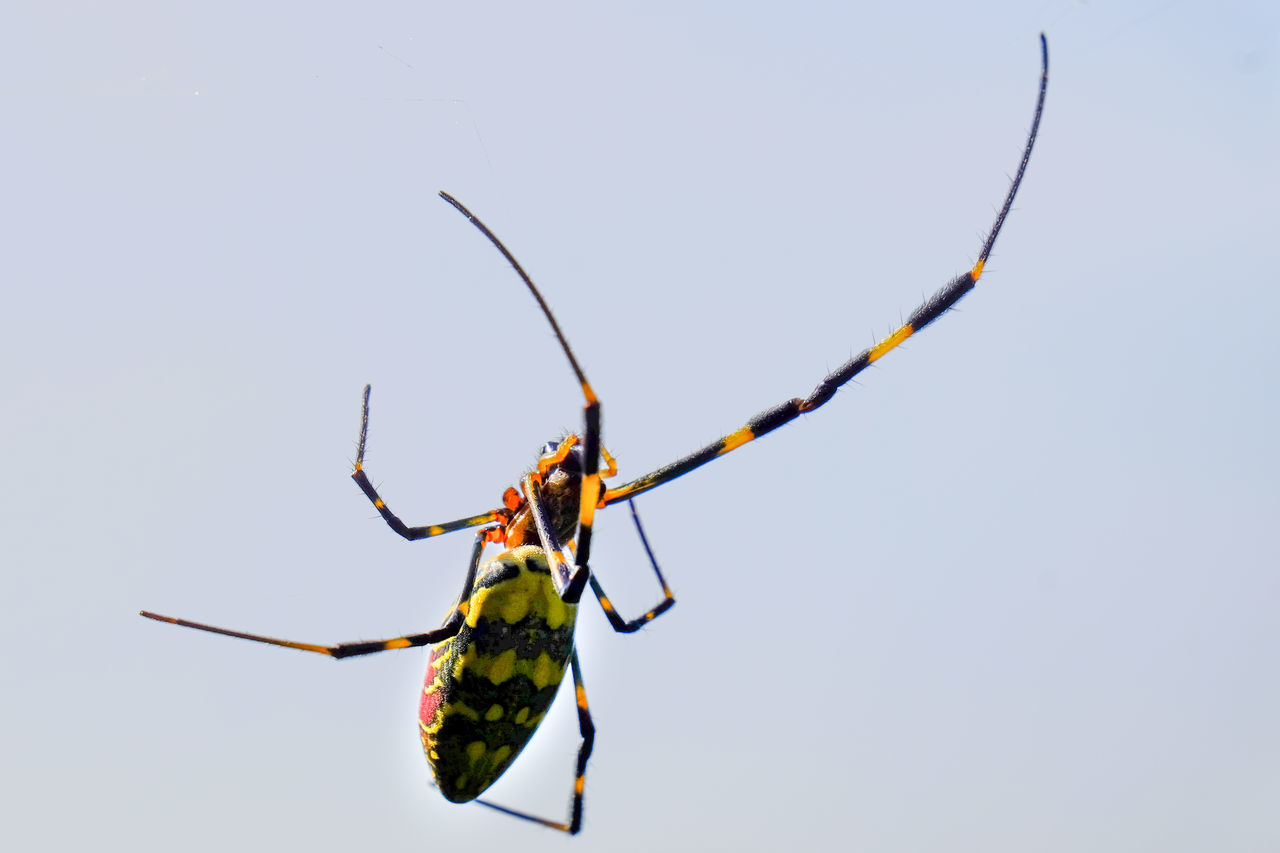 Beautiful stock photos of spinnen, Animal Markings, Animal Themes, Animal Wildlife, Animals In The Wild