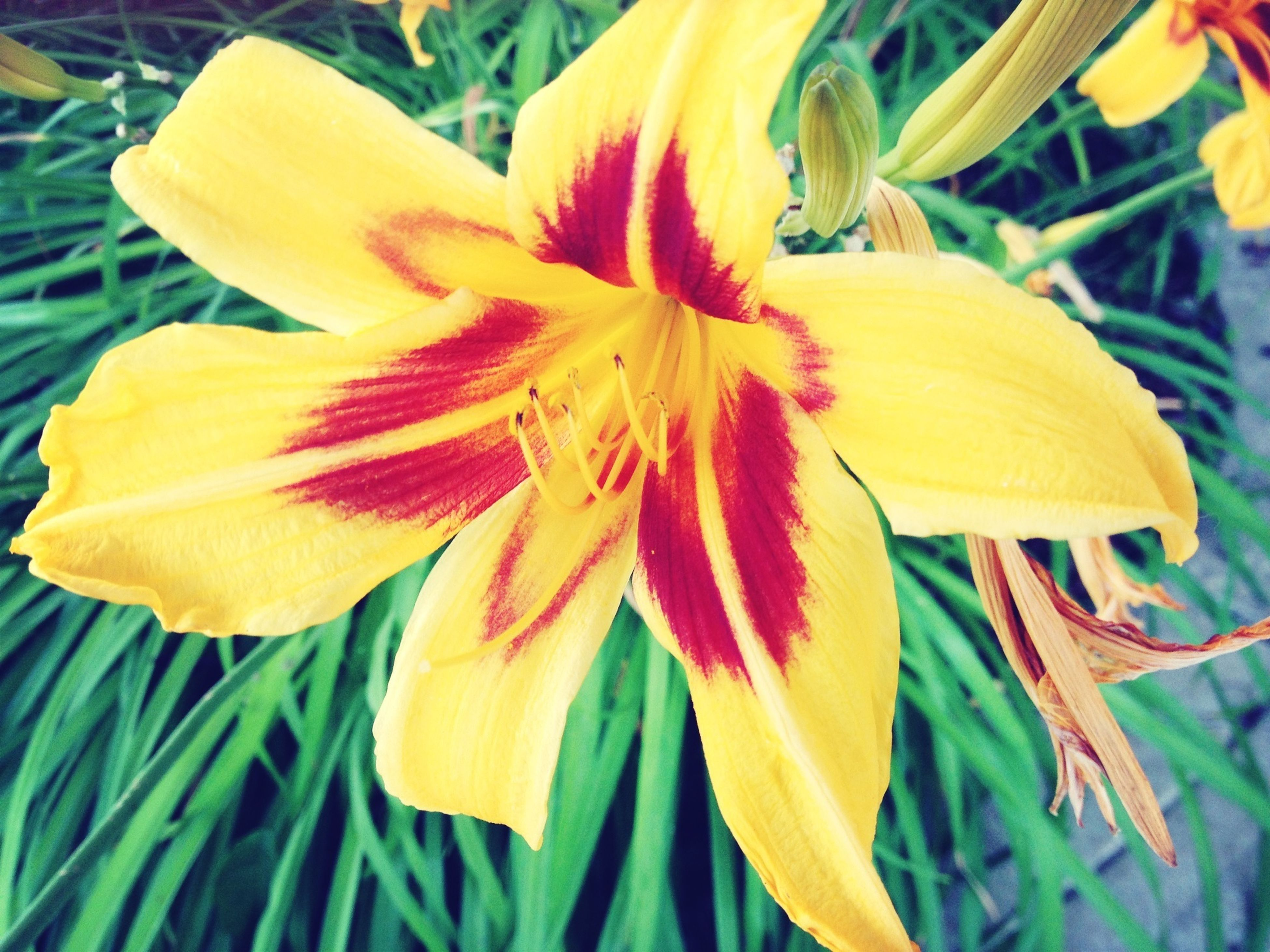 flower, petal, flower head, freshness, fragility, yellow, growth, beauty in nature, close-up, blooming, nature, stamen, single flower, pollen, focus on foreground, plant, in bloom, blossom, park - man made space, day