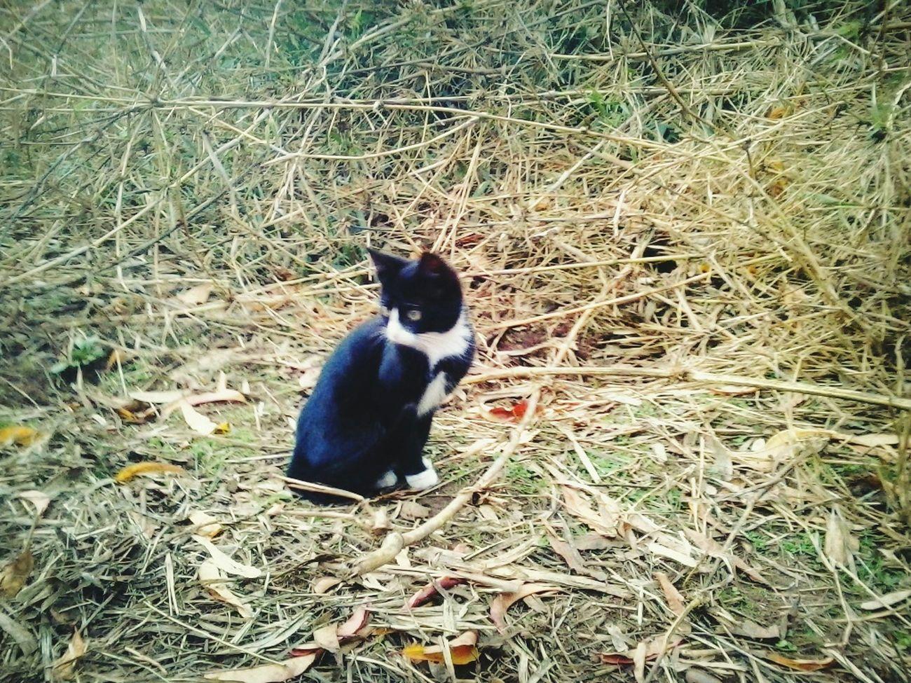 Venhus Mi Pequeña  Ilovecats Cats Collection