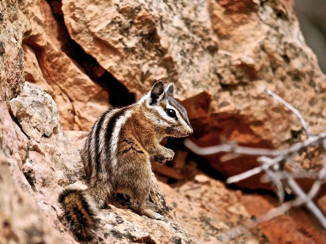 Animal Themes Animal Wildlife Animals In The Wild Nature No People One Animal Small Animal Streifenhörnchen