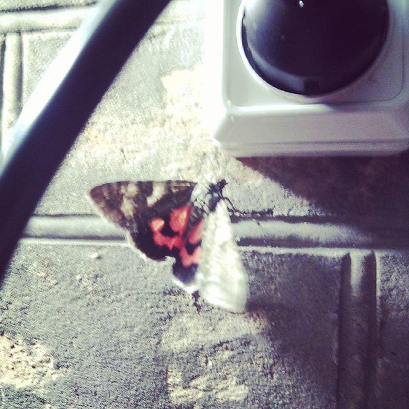 This is babochkaaaaa bleat' 😂 Joke Russians Russianjokes Butterfly красиво ночь хэштег лол моль бабочка насекомое