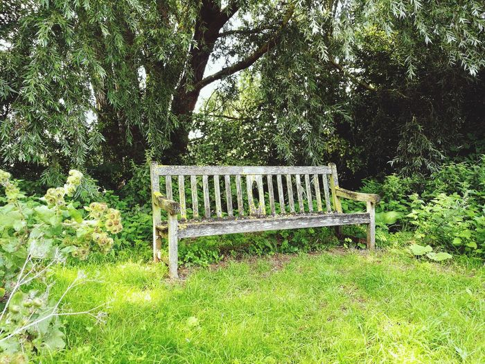 Green Color Outdoors Benches_Of_The_World_Unite Tranquility Getting Away From It All Sommergefühle The Great Outdoors - 2017 EyeEm Awards Live For The Story Let's Go. Together. Investing In Quality Of Life Breathing Space EyeEm Selects The Week On EyeEm Scenics Green Color Tranquil Scene