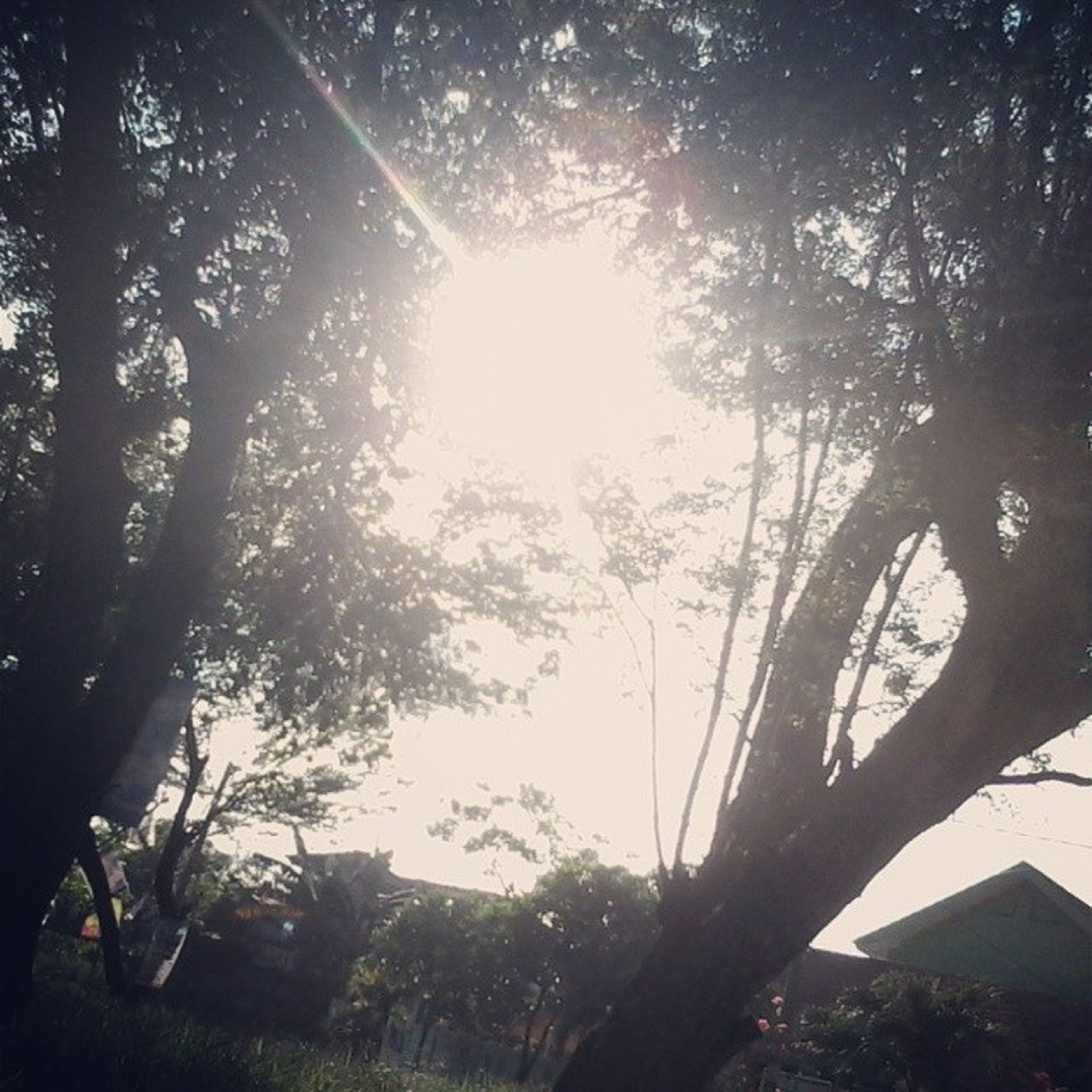 tree, sun, low angle view, sunlight, branch, sunbeam, growth, lens flare, building exterior, nature, built structure, tree trunk, sky, architecture, tranquility, silhouette, beauty in nature, outdoors, no people, day