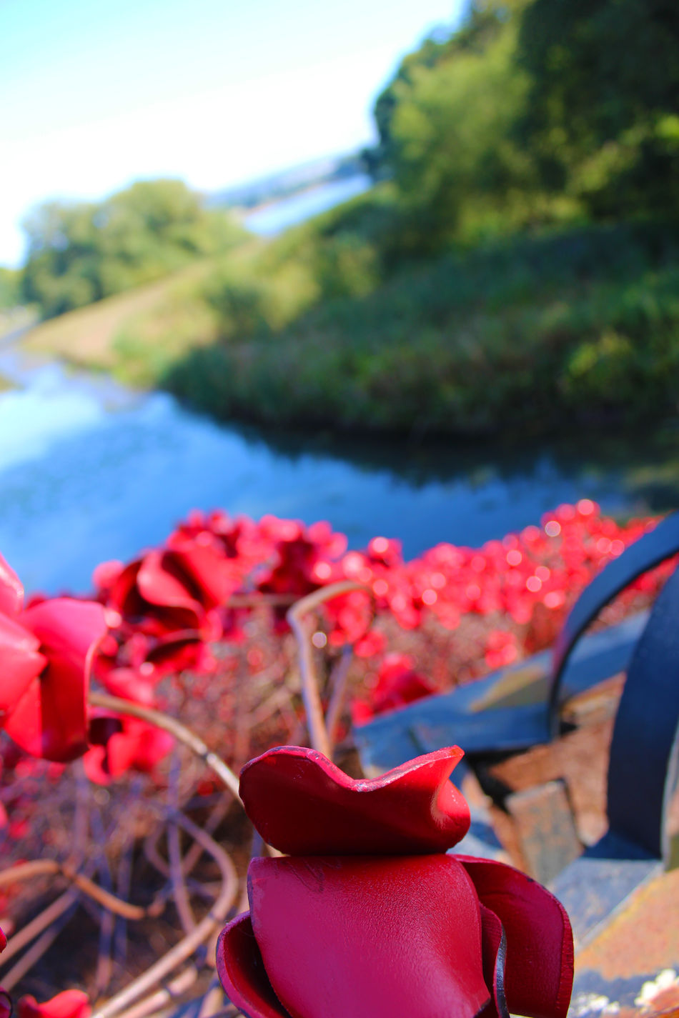 Eye4photography  Check This Out EyeEm Best Shots Poppies  Cascade Bridge Yorkshire Sculpture Park Our Best Pics EyeEmBestPics Eye4photography