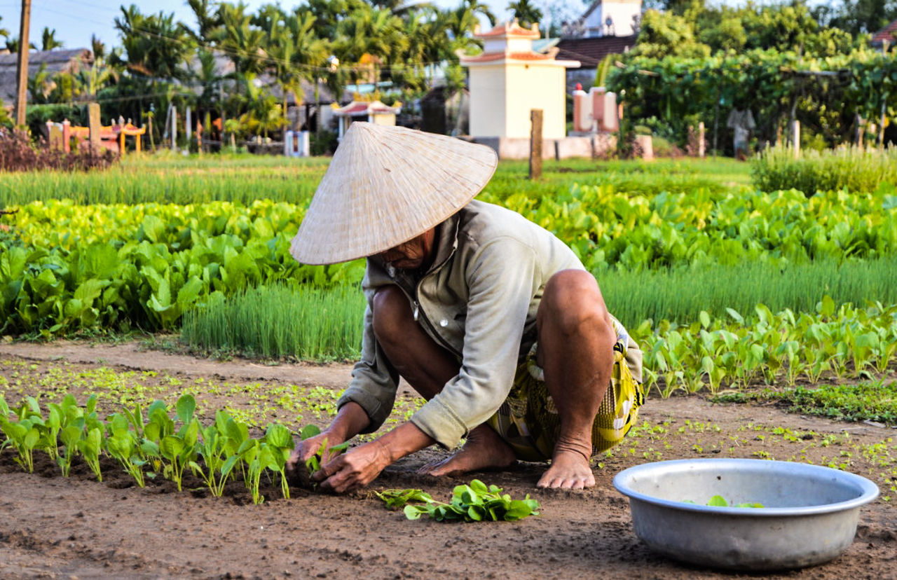 Beautiful stock photos of vietnam, agriculture, food and drink, full length, rural scene
