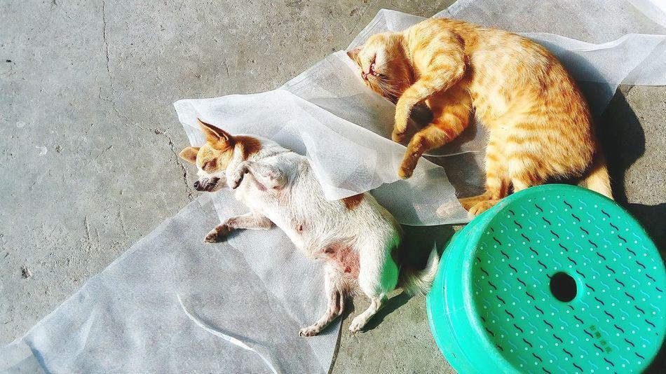 Dog Cat Love Chiwawa Poppy Kitty 友誼