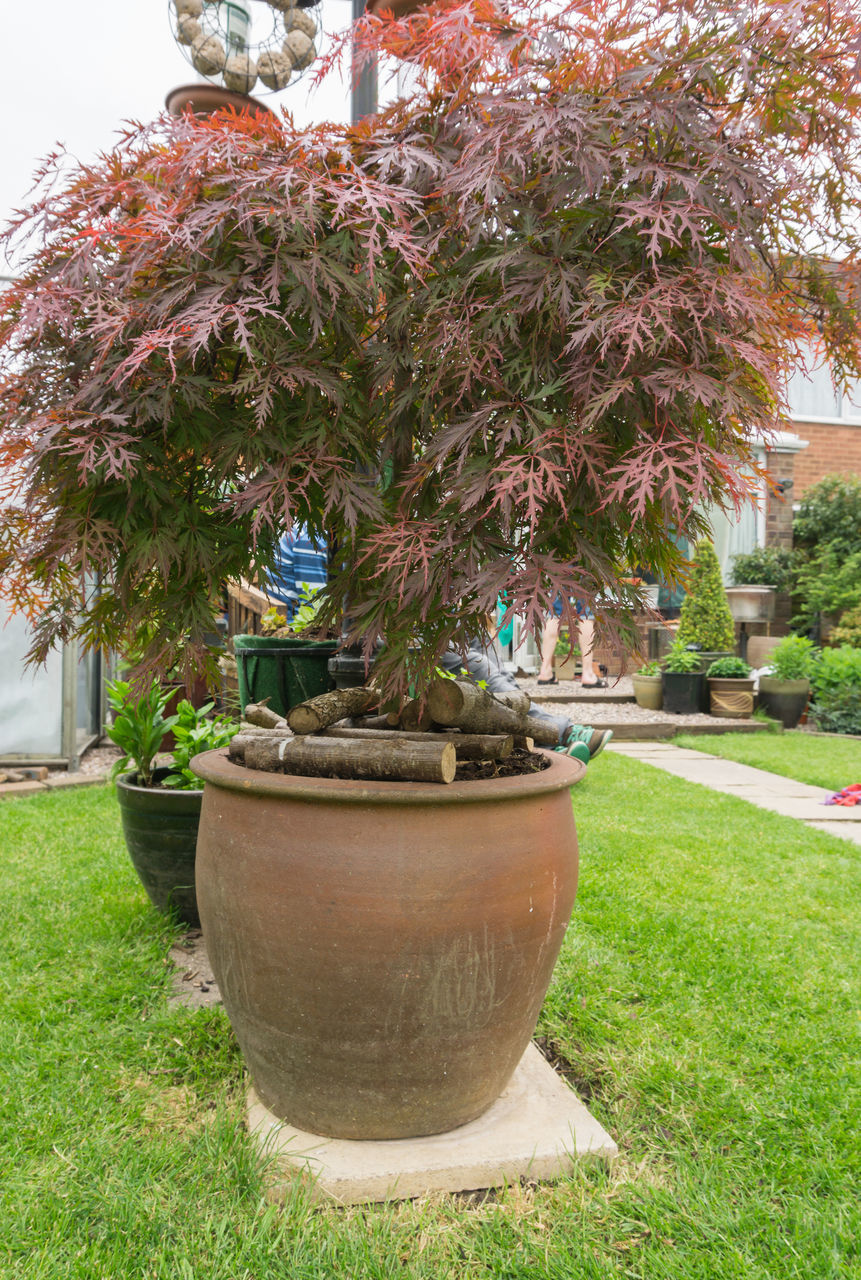 potted plant, growth, grass, plant, tree, front or back yard, day, nature, flower, no people, outdoors, green color, beauty in nature, architecture, sky