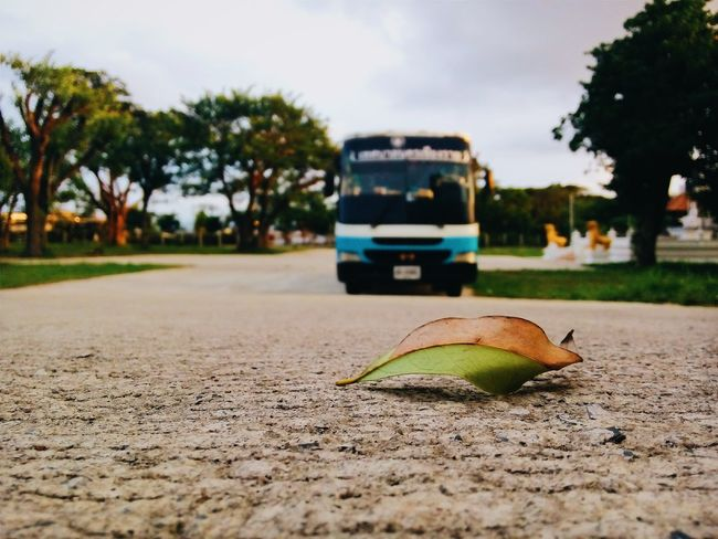 Shool Bus Shoolbus Couldy Leaf 🍂 Withfriends At Crms6 Studying Evening Happyday