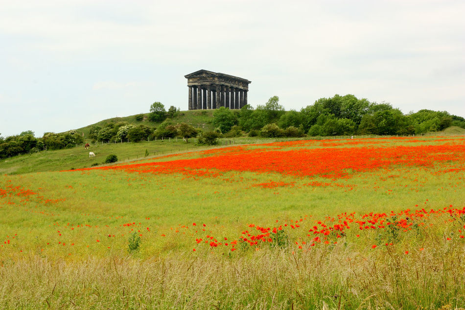 The Penshaw Monument in County Durham behind a field of red poppies in bloom. Architecture Countryside County Durham Field Monument Outdoors Penshaw Monument Poppies
