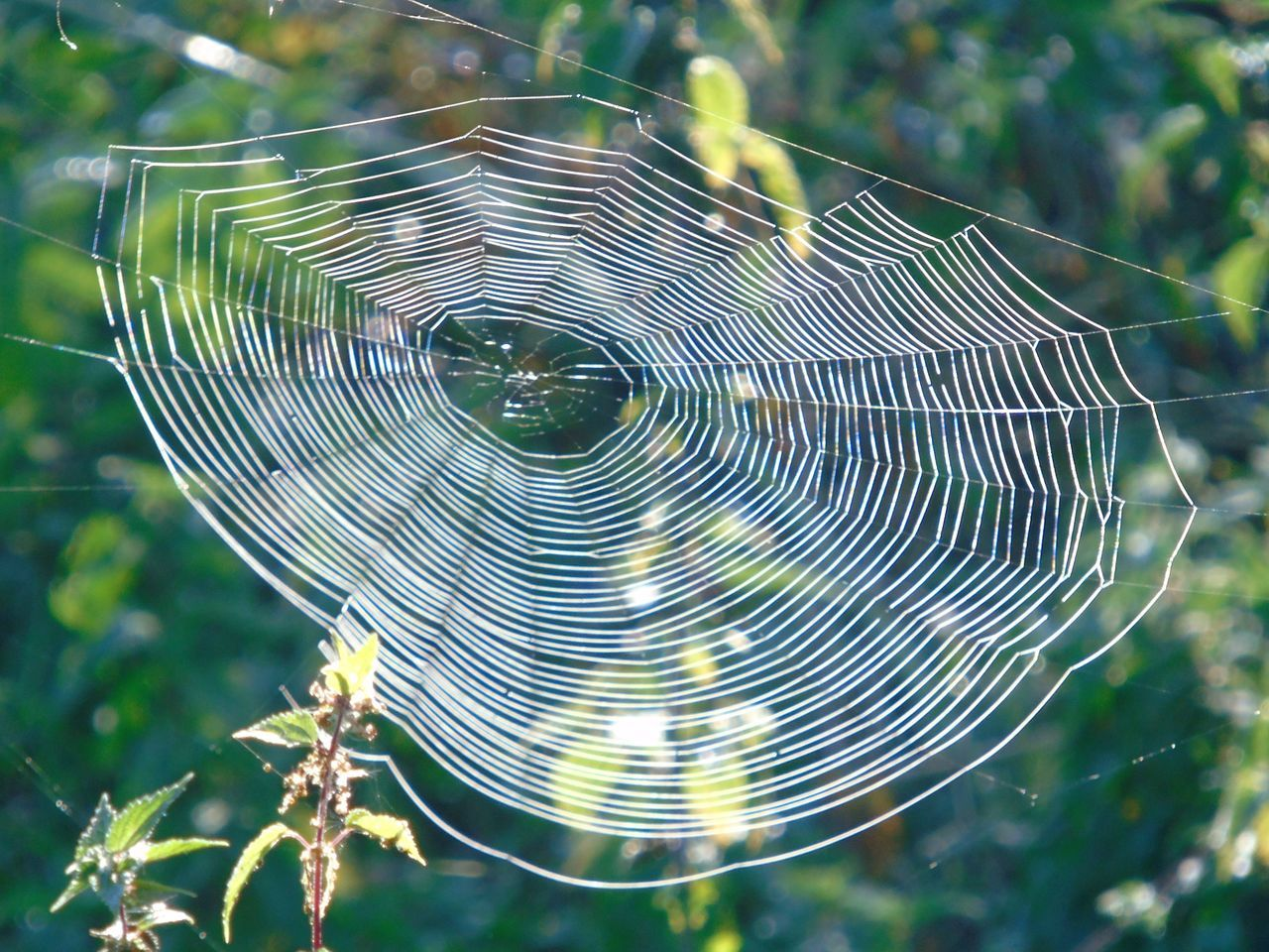 Animal Markings Animal Themes Beauty In Nature Close-up Cob Web Complexity Day Focus On Foreground Fragility Green Color Growth Intricacy Natural Pattern Nature No People Outdoors Pattern Plant Spider Web Spiderweb Tranquility Trapped Web