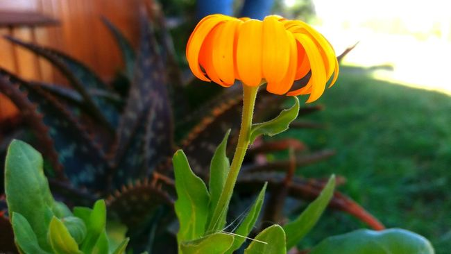 Lifeisworthliving CarpeDiem  Relaxing Nature Photography Plants And Flowers Flowers,Plants & Garden Flowerlovers Flowers Flower Flower Collection Flower Photography Flowers_collection Nature On Your Doorstep Flowers, Nature And Beauty EyeEm Nature Lover EyeEm Gallery Taking Photos Taking Pictures Taking Pics Beautiful Photography Orange Orange Flower Flowerorange Flower Orange