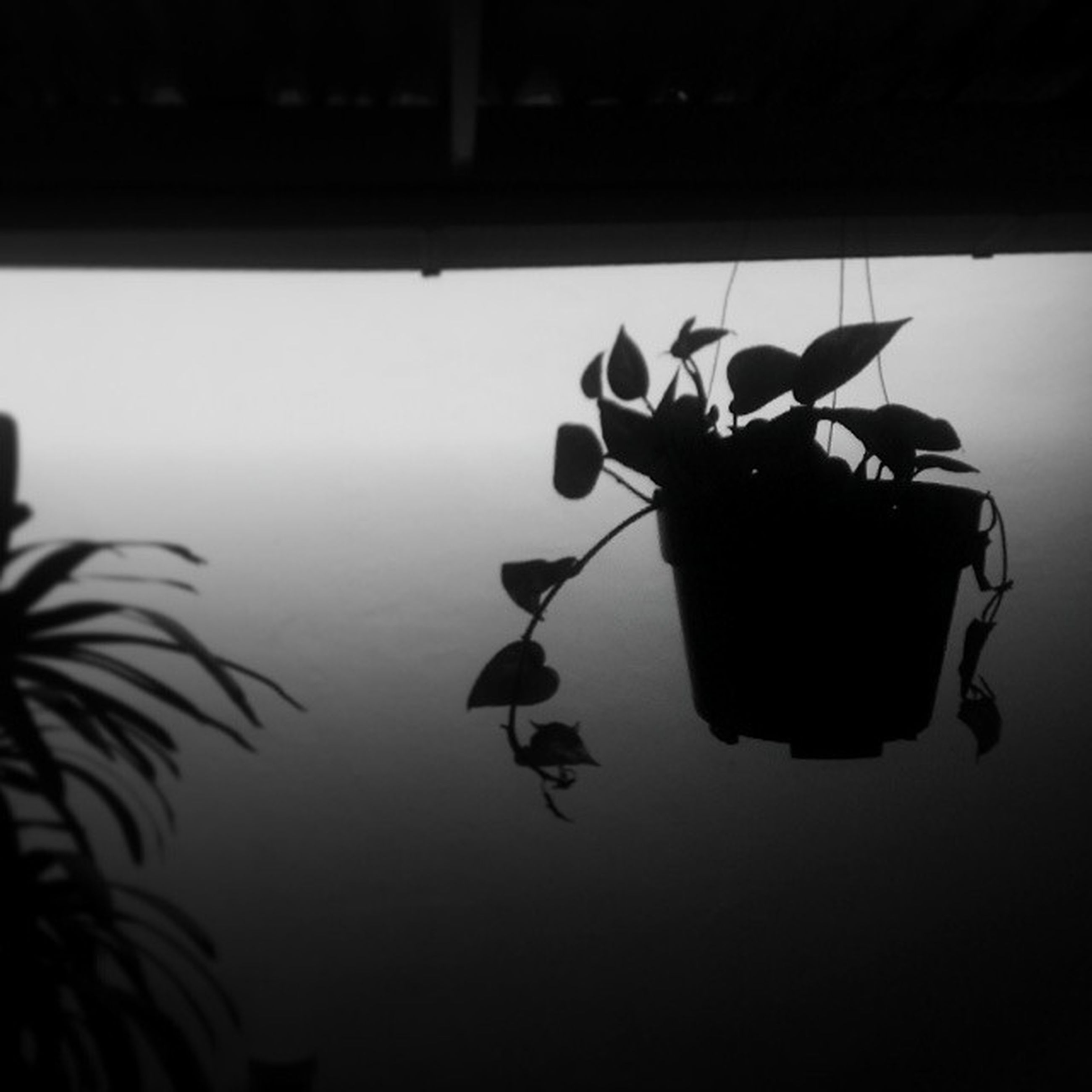 indoors, silhouette, water, table, reflection, dusk, no people, close-up, sunset, nature, hanging, leaf, plant, still life, sky, vignette, copy space, focus on foreground, decoration, tranquility