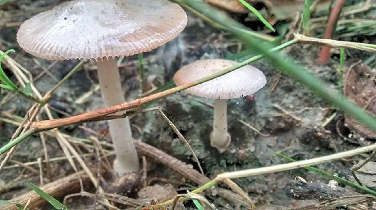 Cogumelo Mushroom Setas Buzios Buziosrj Rj40graus Errejota  Riodejaneiro Brasil Brazil Semfiltro