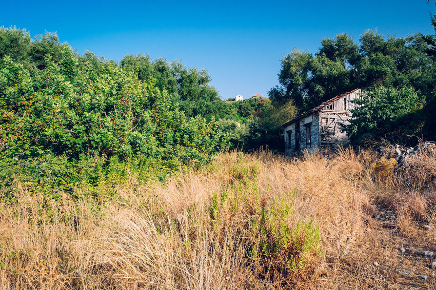 Abandoned Architecture Bad Condition Blue Building Exterior Built Structure Clear Sky Day Farmhouse Grass Green Color House Nature No People Old-fashioned Outdoors Overgrown Plant Remote Retro Styled Rotting Rural Scene Scenics Tranquil Scene Tree