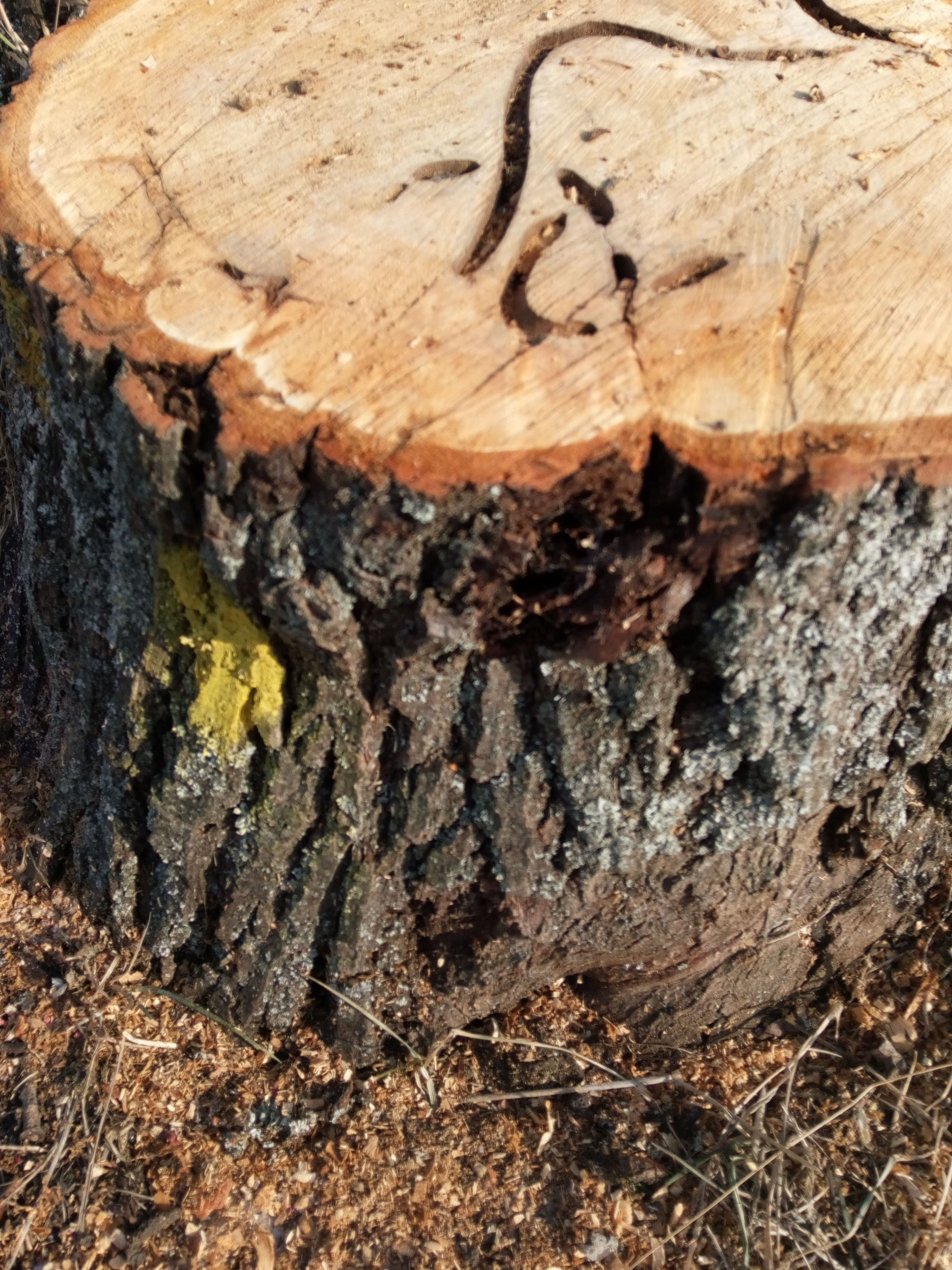 textured, no people, close-up, outdoors, nature, day, tree trunk, tree, backgrounds