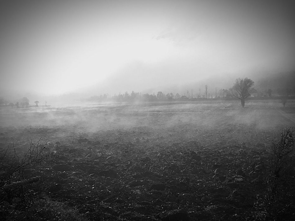Fog Nature Tranquility Tranquil Scene Tree Scenics Beauty In Nature Landscape Mist Day Outdoors Growth Field No People Hazy  Sky