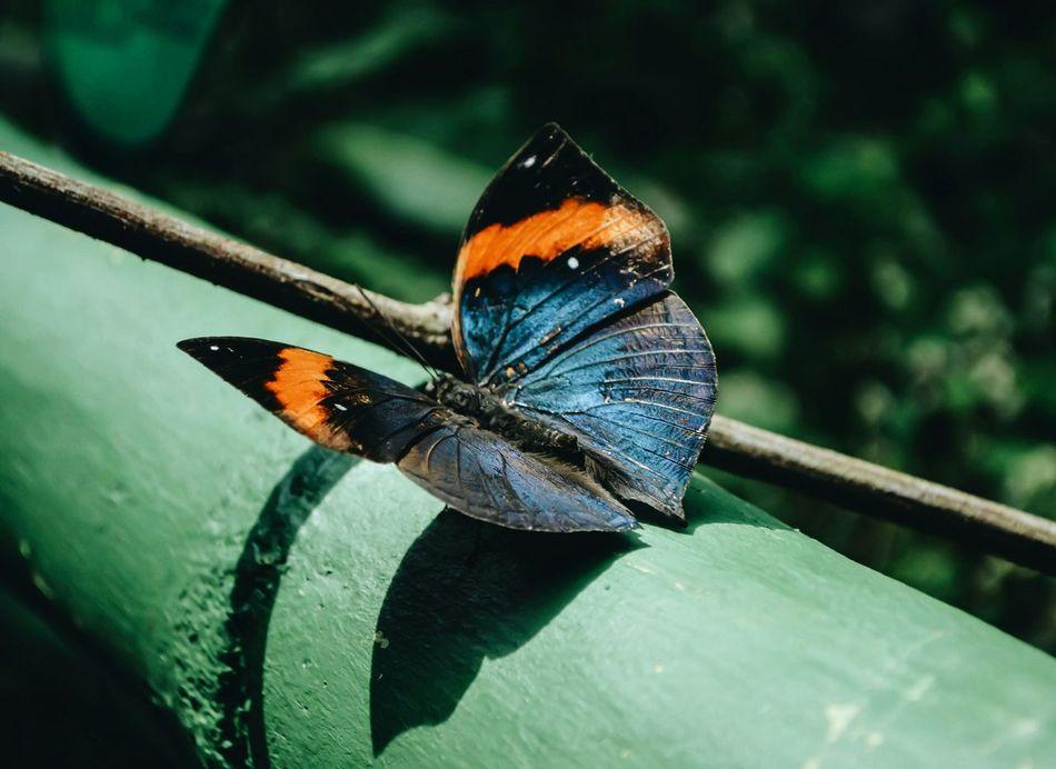 🐝 Baterfly Baterfly Garden Macro Malaysia Penang Nature