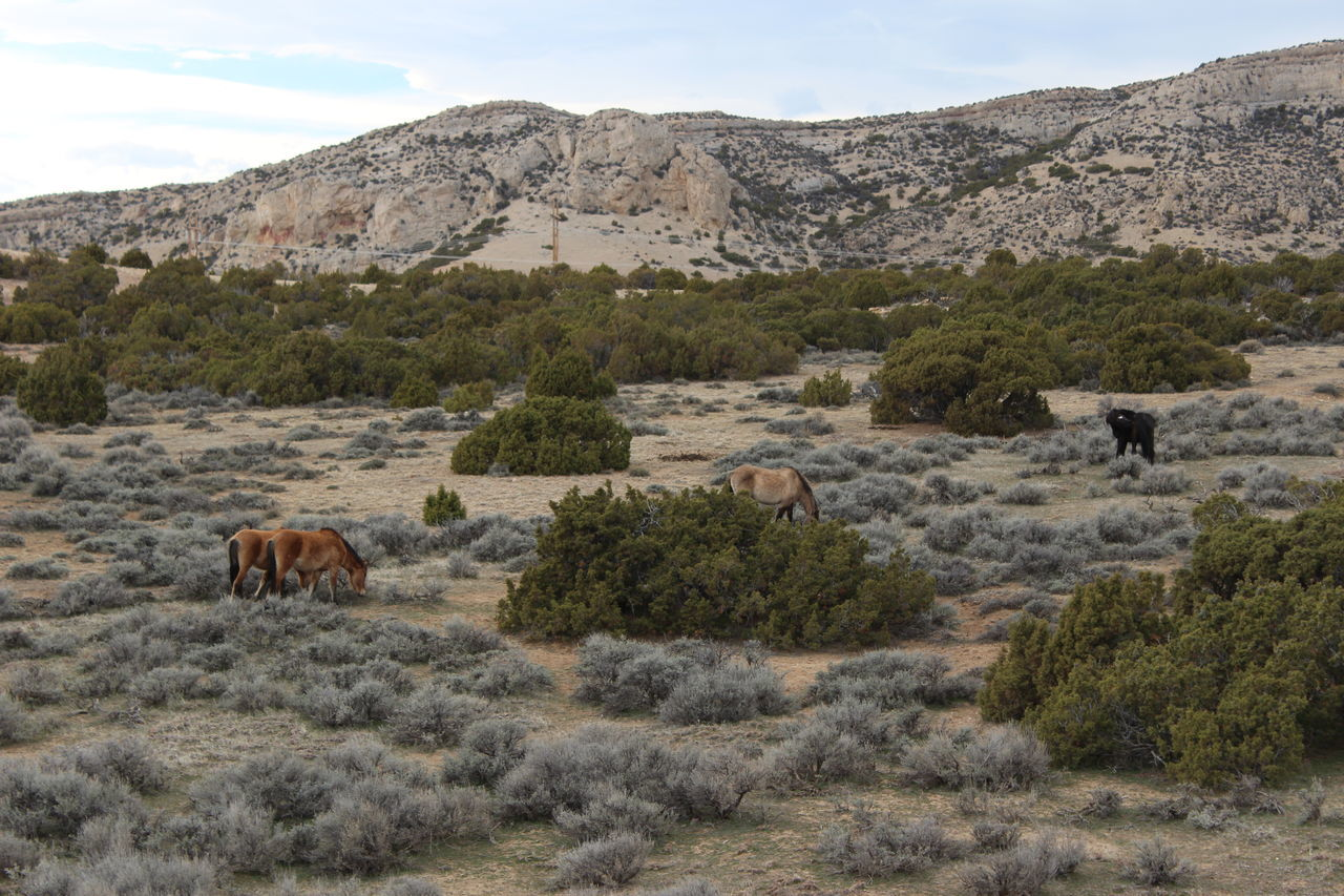 Sagebrush Tranquility No People Scenics Backgrounds Montana Beauty In Nature Day Outdoors Parks And Recreation Sky Rocks Wild Mustangs Horses