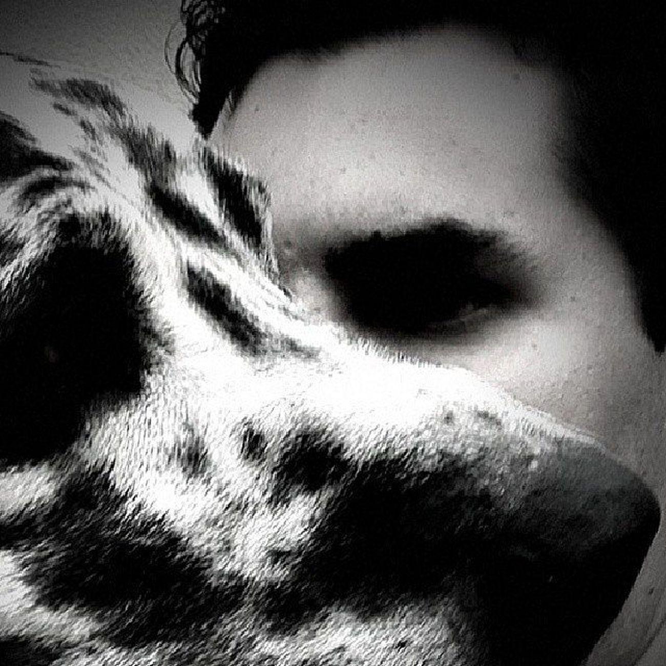 Dogselfie Dog Mydog Mypet Dogalemao Arlequim Pretoebranco Ozzy Friends Bestfriends Brasil Saopaulo SP Aldeiadaserra Gopro Goproselfieguy Selfiegopro Goproerman Instagopro Goprouniverse Goprobrsl Goprobr Goprocle Selfiegoproheros Familiagopro_ hero3 euamogopro actioncam actioncambrasil