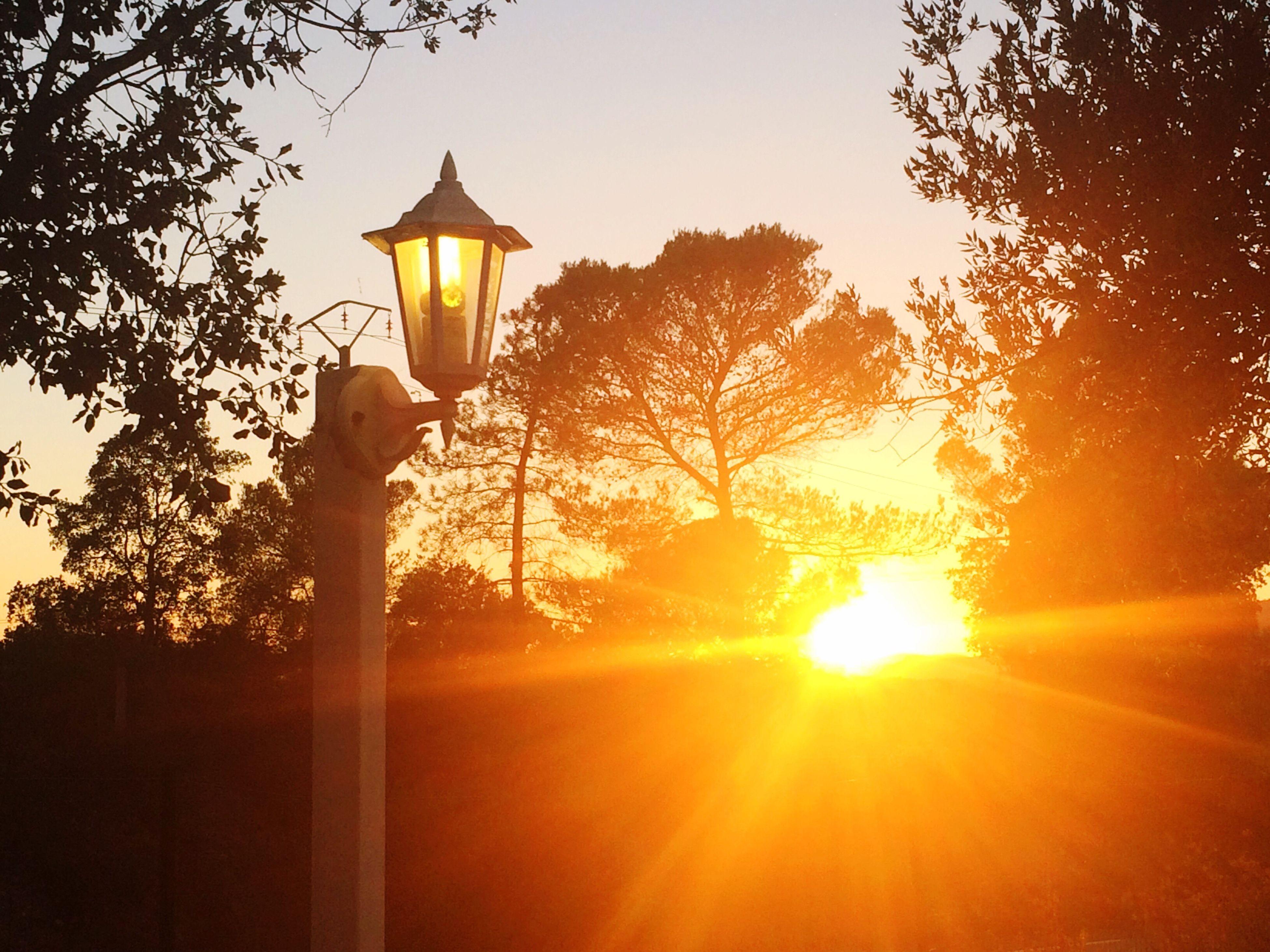 sunset, sunlight, orange color, lens flare, sun, beauty in nature, no people, nature, sunbeam, sky, tranquil scene, tree, scenics, outdoors, sunrise, day