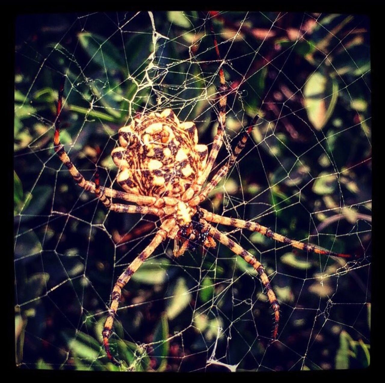 Hungry spider Spider Web Spider Web Animals In The Wild Beauty In Nature