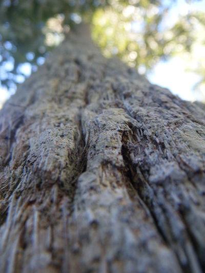 Tree Bark Close Up Brown Green Sun Upward Upward View Light Leaves