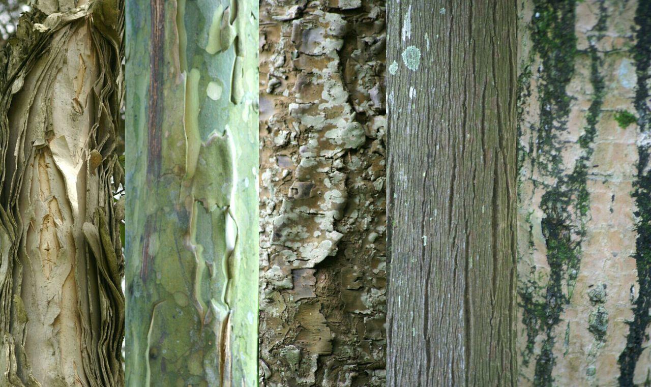 Tree Bark Treetastic Streamzoofamily Nature Lovers