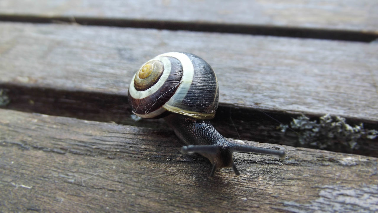 Animal Antenna Animal Shell Close-up Day Escargot Focus On Foreground HDR Hdr_Collection Life Light Macro Nature No People Outdoors Selective Focus Shell Snail Snail Snail Collection Snails Snailshell Snail🐌 Wood Wood - Material Wooden First Eyeem Photo