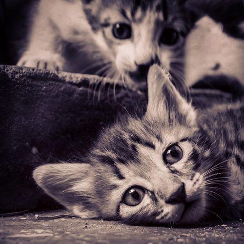 Curiosity Kitten Cat Monochrome First Eyeem Photo
