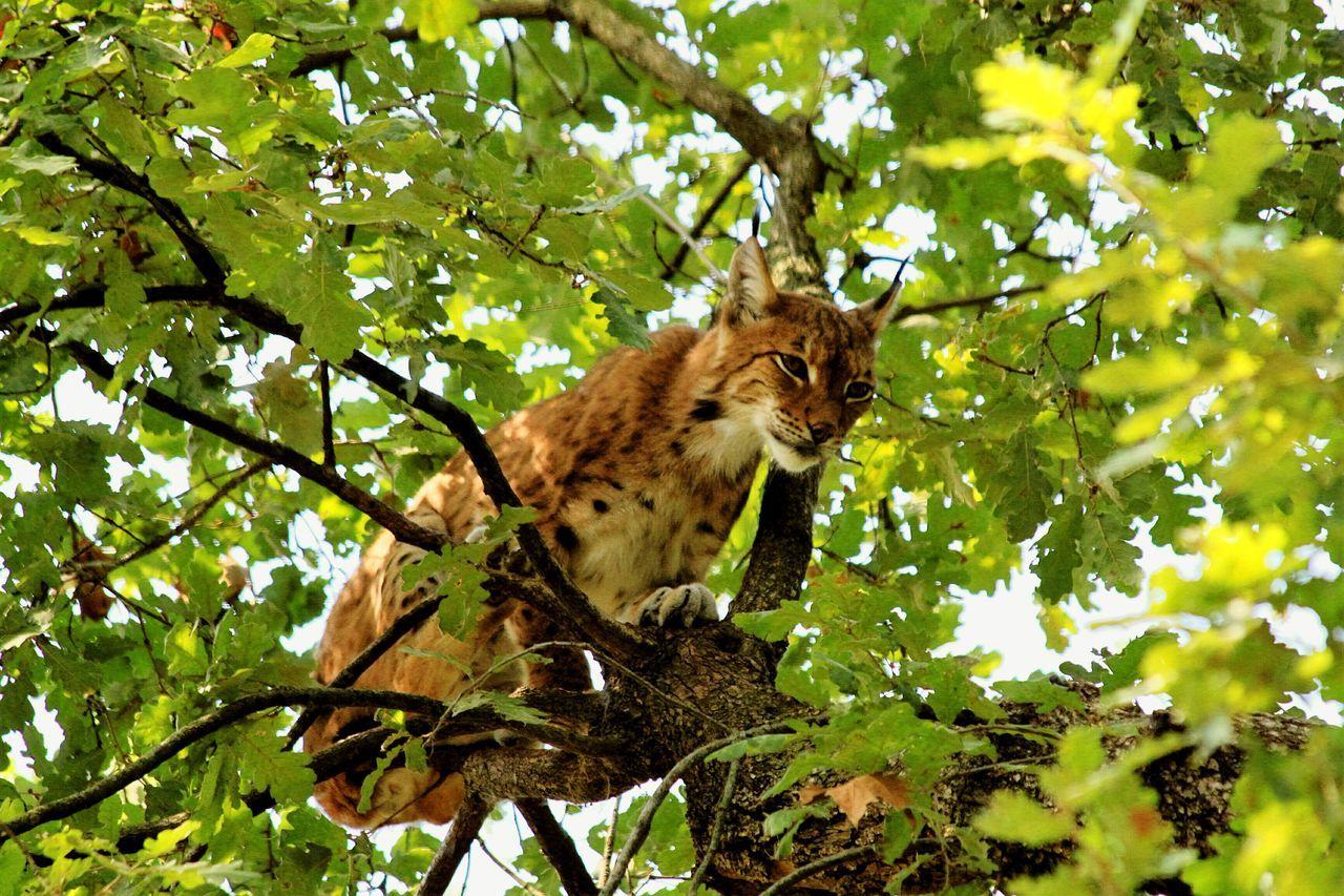First Eyeem Photo One Animal Tree Zoology Nature Beauty In Nature Zoo Natura Viva Lago Di Garda