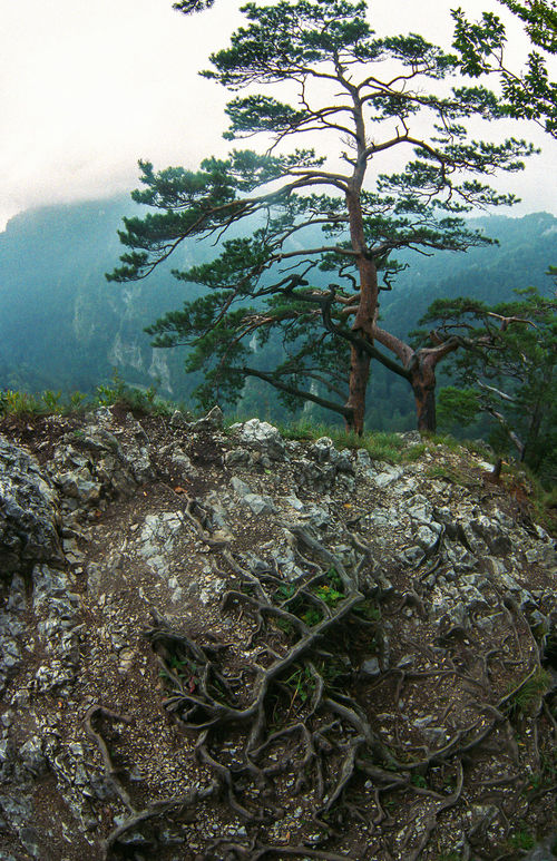 Analogue Photography Beauty In Nature Branch Day EyeEm Best Shots EyeEm Nature Lover Landscape Mountains Nature No People On The Top Of The Mountain Outdoors Pieniny Poland Poland Nature Rocks Roots Of Tree Scenics Tranquility Tree