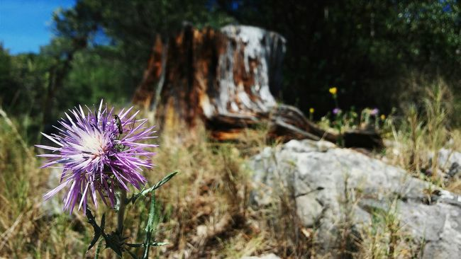 Mont Boron, Nice, French Riviera Montboron NiceFrance Flower Bug Greenery Nature Outdoors Beauty In Nature Tree Close-up No People Grass Cotedazur Provence Mediterranean  Coast Frenchriviera France Hiking Countryside Provencealpescôtedazur Flower Nature Purple Growth