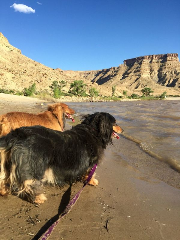 Doxies at the Beach Domestic Animals Pets Dog Mammal Clear Sky Outdoors Nature Day No People Scenics Beauty In Nature Mountain Arid Climate Landscape Physical Geography Tranquil Scene Water Geology Desert Utah Dachshund River Rock Formations Doxie Pair