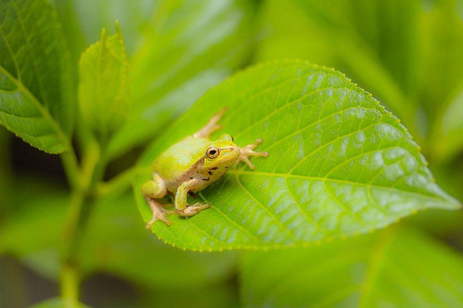 Beautiful stock photos of frog, Amphibian, Animal, Animal Themes, Beauty In Nature