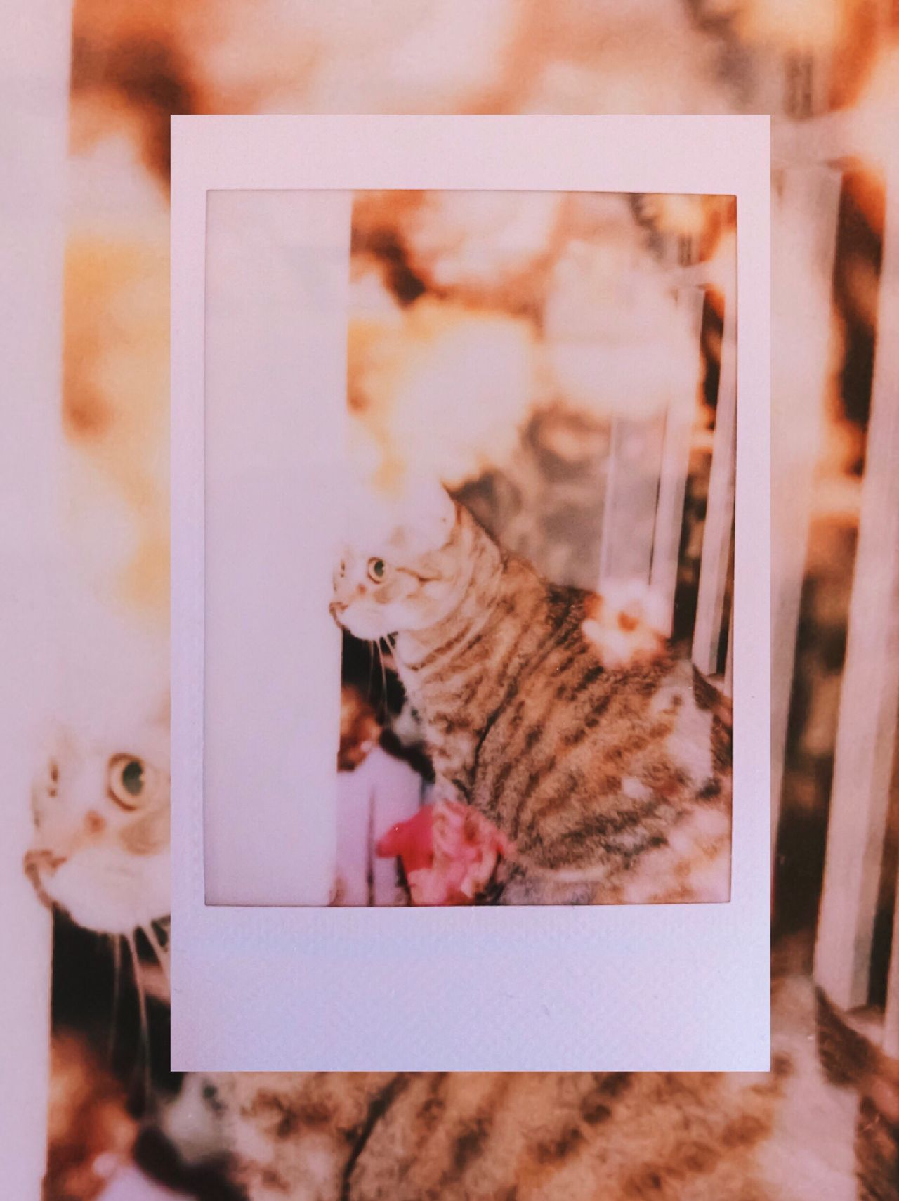 day 27 - Quinn Taylor & flowers // double exposure 😻💐 Instant Photo A Day Domestic Cat Pets Domestic Animals Mammal One Animal Animal Themes Feline Cat Indoors  No People Day Double Exposure Film Is Not Dead Film Photography Film Kitten Flower Flowers Simplicity Beauty