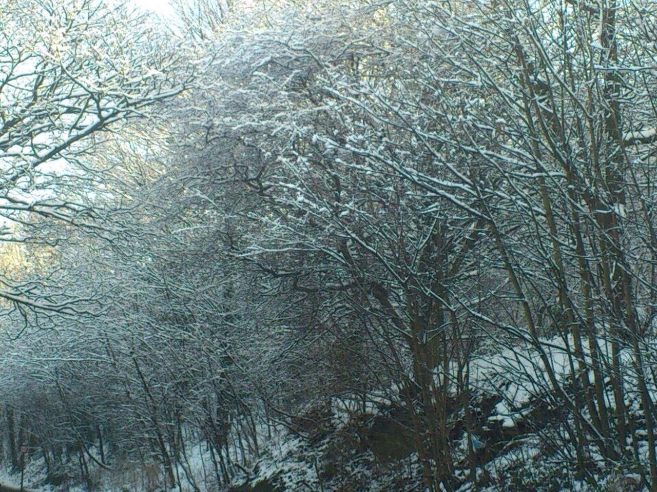 Snow Woods Snow Woods